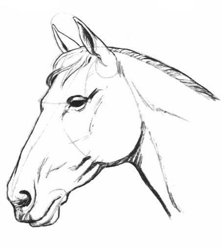 Comment faire un cheval - Tete de cheval a imprimer ...